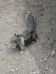 Lesetext mit Fragen zum Text: Streifenhörnchen