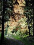 HSU Probe Waldpflanzen