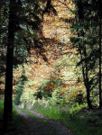 Wald Erlebnistext